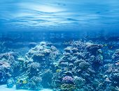 Sea or ocean underwater with coral reef and tropical fishes