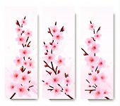 Three spring banners with blossoming sakura branches.  Raster version.
