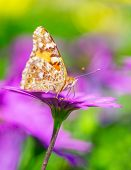 Closeup photo of beautiful butterfly with gorgeous colorful wings sitting on purple flower, beauty of nature, summer time season