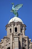 ������, ������: Liver Bird Perched On The Royal Liver Building