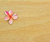 Pink Plumeria On Wooden Floor.