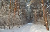 Winter Landscape In Forest