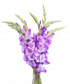 pic of gladiolus  - bunch of gladiolus flowers isolated on white background - JPG