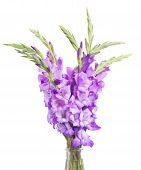 stock photo of gladiolus  - bunch of gladiolus flowers isolated on white background - JPG
