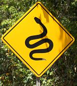 Snakes / animals crossing road sign