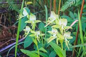 Wild Orchids In Nature