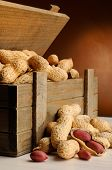Group Of Peanuts On With Trunk Wooden Container Vertical Composition