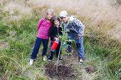 pic of walnut-tree  - Three children watering new planted walnut tree - JPG