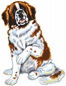 saint bernard dog