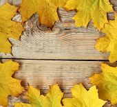 Marple Leaves Frame On Wooden Texture