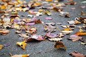 Fallen Autumnal Leaves Lay On Urban Asphalt Road