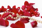 Rose petals and pearl beads isolated on white