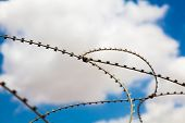 Barbed Metal Wire Against