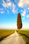 Tuscany, Lonely Cypress Tree And Rural Road. Siena, Orcia Valley, Italy.