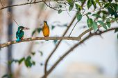 A couple of colourful birds watching each other with little fish in month