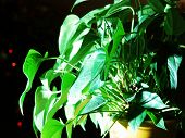 The Green Plant In The White Light