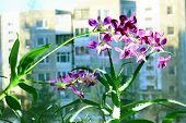 Close Up Picture Of A Orchid And Aloe On A City Background.