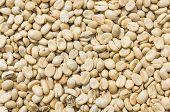 Unroasted Coffee Bean
