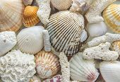 light background of sea shells and coral