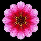 Purple Flower Mandala Kaleidoscope Isolated On Black
