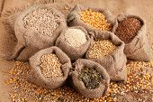 picture of flax seed  - Row healthy grain food  - JPG
