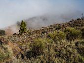 Northern Slope Of Volcano Teide. Tenerife, Canary Islands. Spain