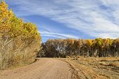 Trees in Vibrant Fall Colors along Gravel Road