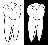 foto of molar  - Tooth With Root Graphic Style is an illustration of a human tooth or molar in a black and white graphic style - JPG