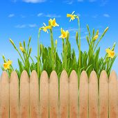 garden fence wooden spring blooming flowers sky