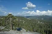 View of Sequoia National Park