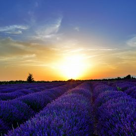 foto of plateau  - Stunning landscape with lavender field at sunset - JPG