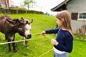 picture of donkey  - Cute little girl feeds donkey in a farm - JPG