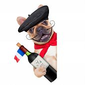 image of french beret  - french bulldog with french beret hat isolated on white background behind white and blank banner or placard holding a bottle of red wine - JPG