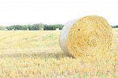 foto of hay bale  - Hay bales on the field after harvest - JPG