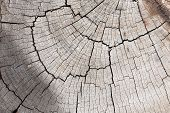 image of timber  - wood logs surface texture background - JPG