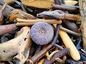 foto of driftwood  - An Urchin amongst the sea of Driftwood - JPG