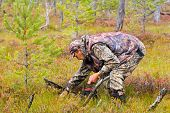 picture of swamps  - man gathers berry cranberry on the swamp - JPG