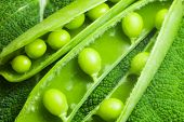 foto of green pea  - disclosed several pods of green peas on a green leaf textural - JPG