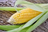 picture of corn  - Sweet corn closeup - JPG