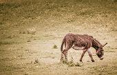 foto of donkey  - Single donkey on a meadow on a farm - JPG