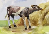 picture of calves  - rustic watercolor illustration of a calf eating hay - JPG