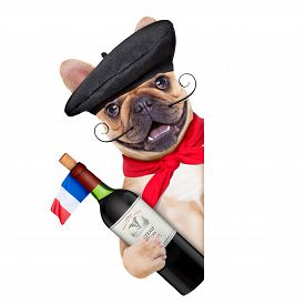 pic of beret  - french bulldog with french beret hat isolated on white background behind white and blank banner or placard holding a bottle of red wine - JPG