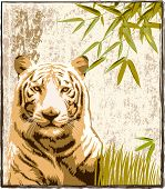 Tiger in a jungle background â?? VECTOR