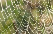 foto of spider web  - spider net - JPG