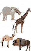 collection of animals inclusive elephant, bison, camel and giraffe