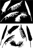 illustration with black and white feathers collection
