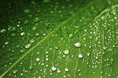 Waterdrops on Leaf 1
