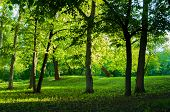 Summer Landscape, Summer Sunny Park At Sunset. Summer Park Trees Lit By Evening Summer Sunlight. Sum poster