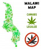 Royalty Free Cannabis Malawi Map Collage Of Weed Leaves. Template For Narcotic Addiction Campaign Ag poster