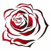 Bright Rose On A Holiday Card. Vector Illustration Of A Bright Rose. Blooming Rose. Hand Drawn Red R poster